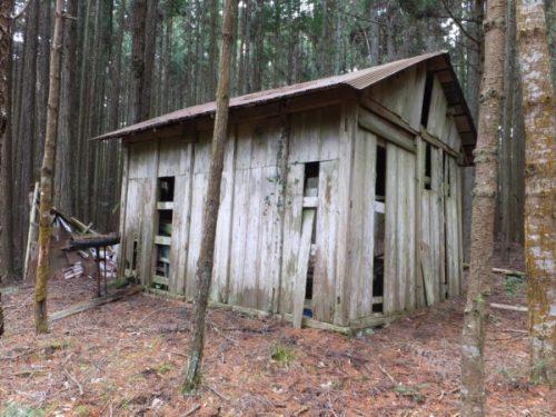 林業用廃屋裏手