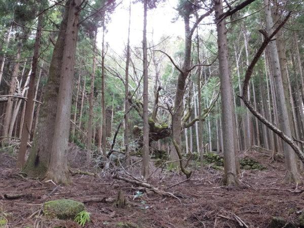 追原廃集落の大楓遠景