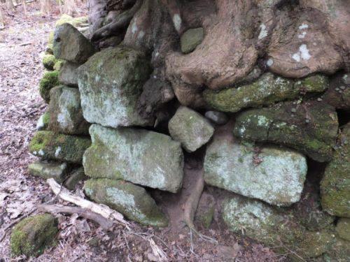 石材で補強された大楓