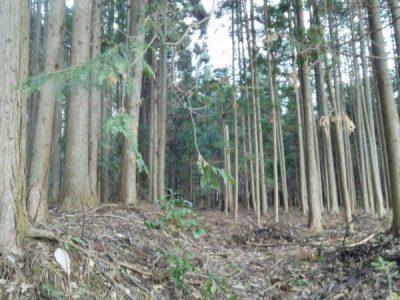 植林帯入口