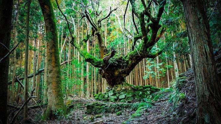【千葉県】【廃村】不気味で神秘的な大楓~追原廃集落