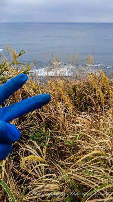 藪から海に向けて撮影