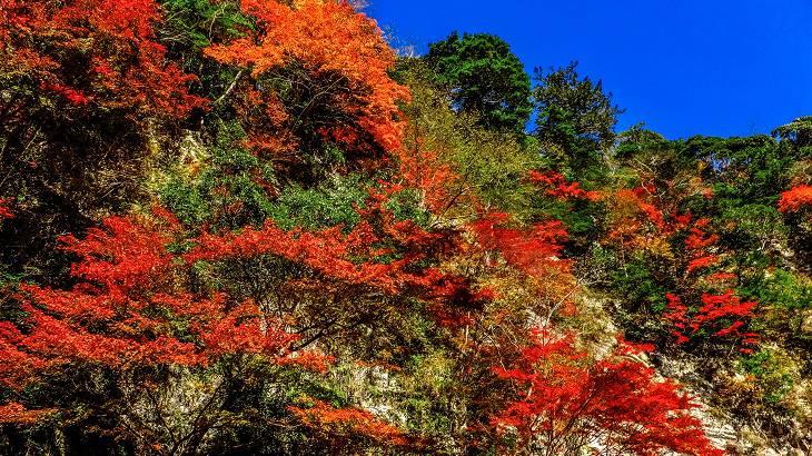 【千葉県】【秘境】白岩~「白いキャンバス」に描かれる渓谷の紅葉