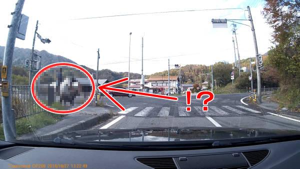【ミニレポ】【長野県】【珍事】酷道418号線の横断歩道を礼儀正しく渡る動物